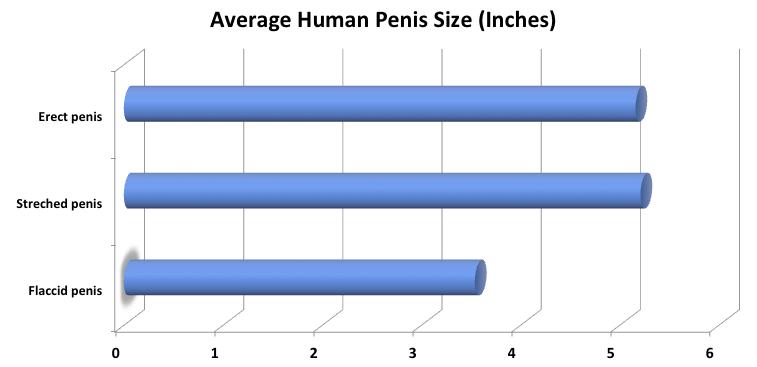 miért kicsi a pénisz a gyors és tartós erekció előkészítése