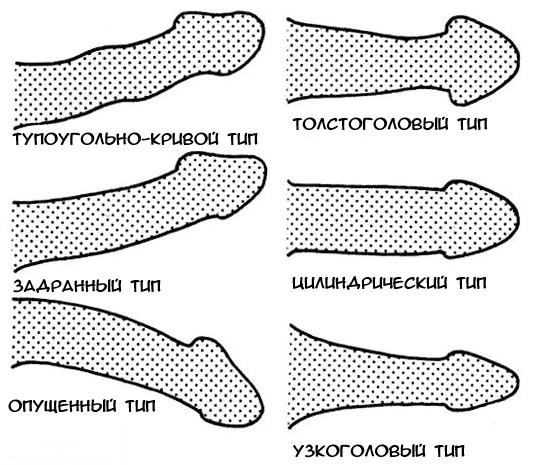 A péniszen túl: ismerd meg a nemi szerved többi, belső részét is