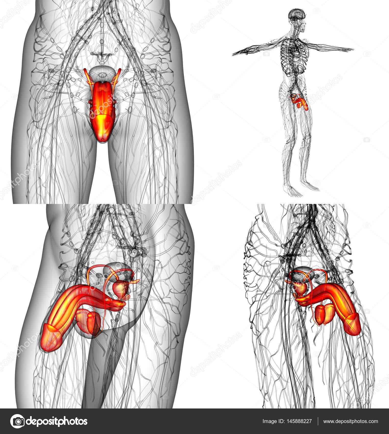 ligációs pénisz