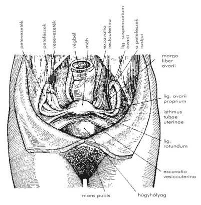 Prosztata-műtét utáni problémák - Prosztatabetegségek