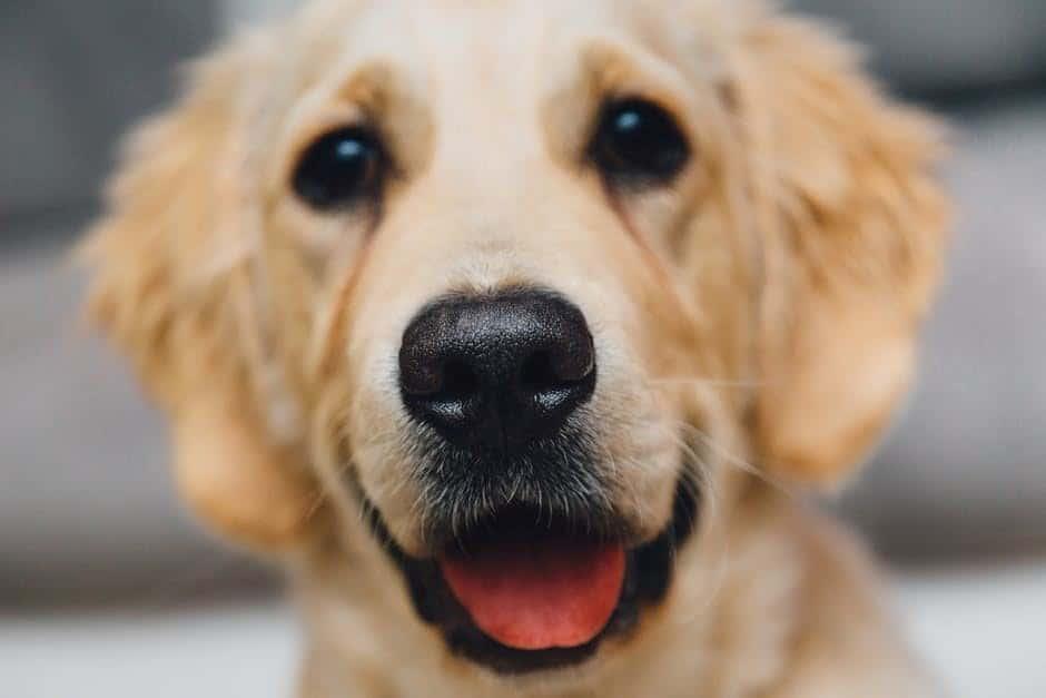 a kutyának nincs merevedése