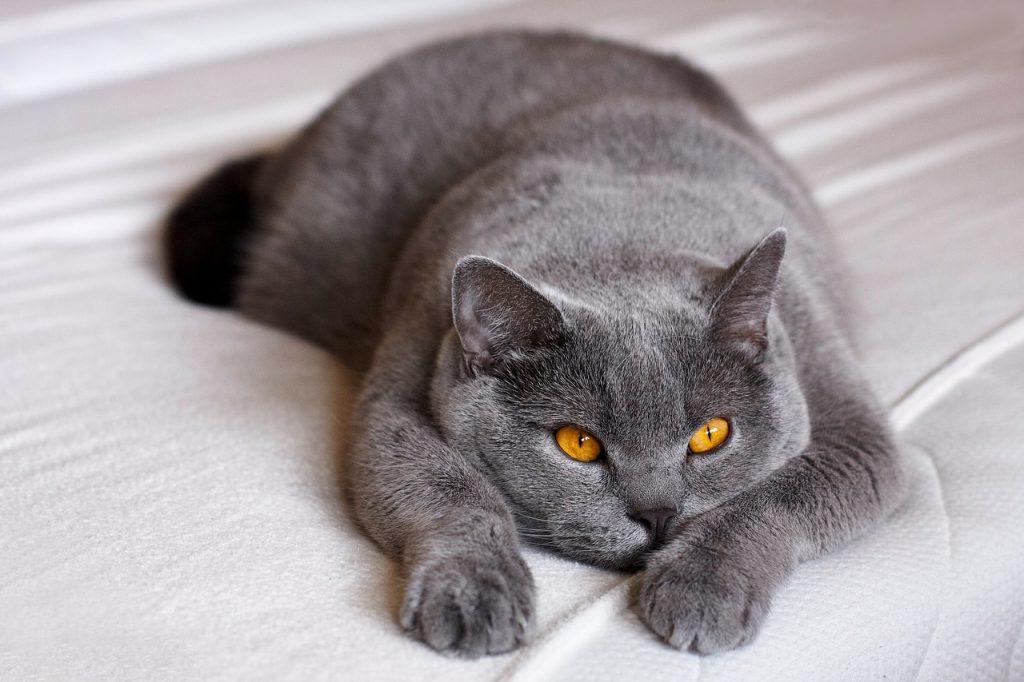 Kandúr cica ivartalanítása után ez normális?