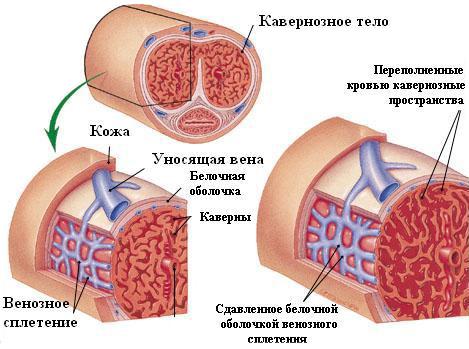 az elégtelen erekció kezelésének módszerei erekciós prosztatagyulladás kezelésére szolgáló gyógyszerek
