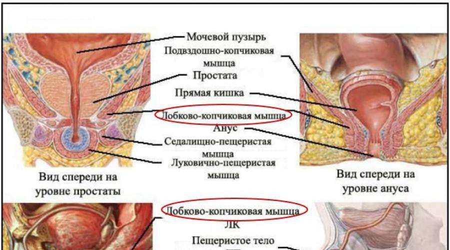 edzeni az erekció izmait