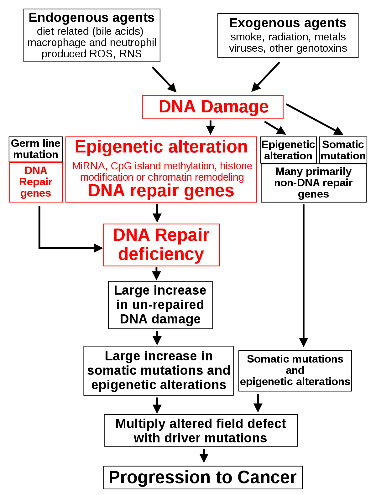 2.3. A gyógypedagógiai diagnosztika típusai a diagnózis jellege szerint