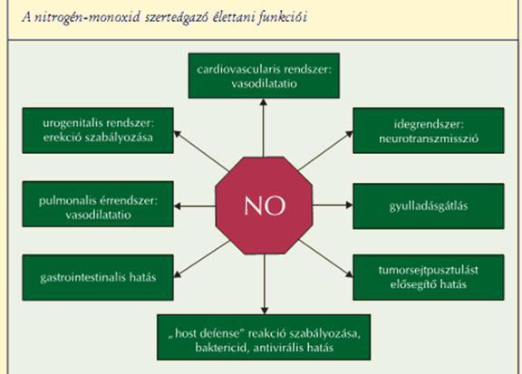 Jelátviteli kaszkád a nitrogén-oxid (NO-szintáz) | Adaptogének