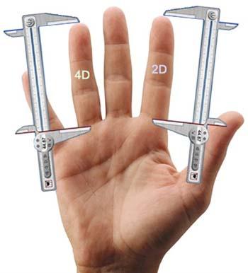 Ha hosszúak az ujjai, a pénisze is méretes?