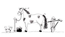 ló pénisz hossza